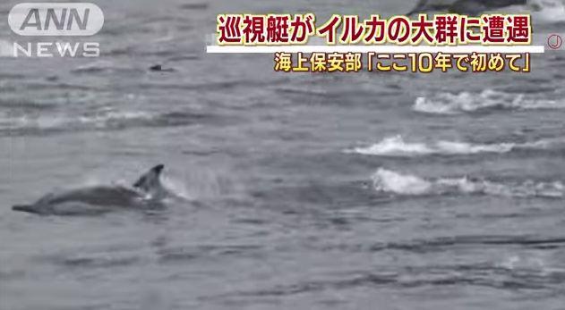 【愛媛】松山沖でイルカ50頭の群れが出現!この海域では極めて珍しい…ここ10年間で初めて