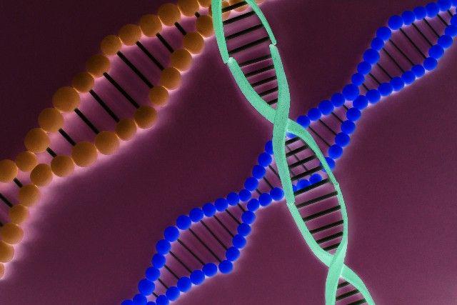 【デザイナーベビー】人間や他の生物のゲノムを人工的に合成するプロジェクトが今年中に開始か