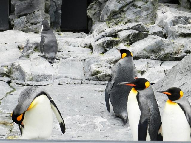 【気候変動】南極の棚氷が激減…今後200年で半減の可能性、氷の融解が急激に加速