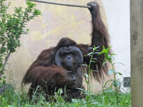 エボラ出血熱で「類人猿」が全滅の恐れ