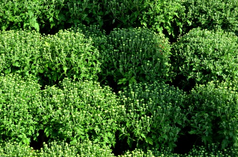 plant7647.jpg