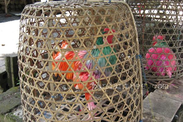 トゥガナン村の闘鶏用鶏