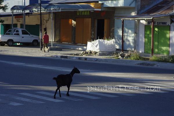 横断歩道を渡る山羊