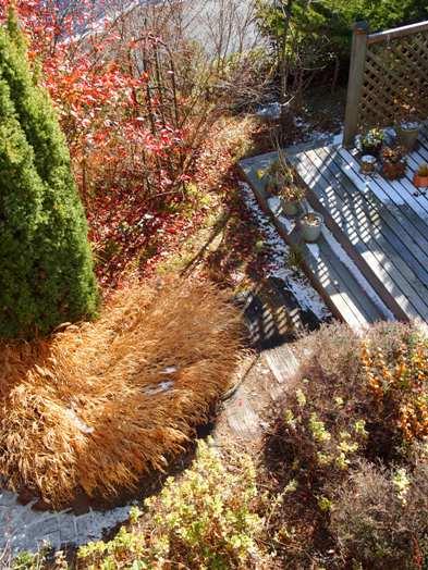 my-garden 044 (2)