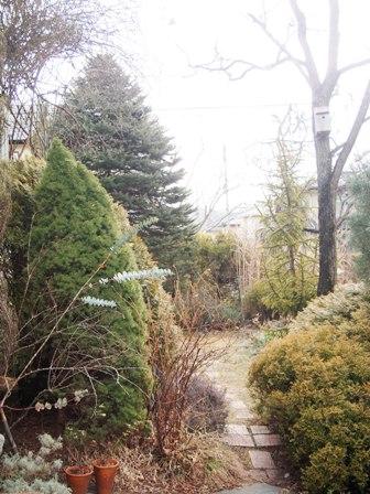 my-garden 062