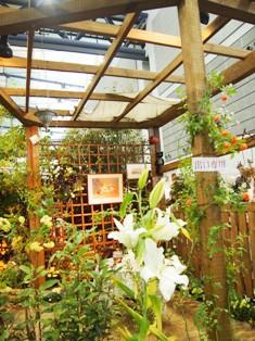 my-garden 157