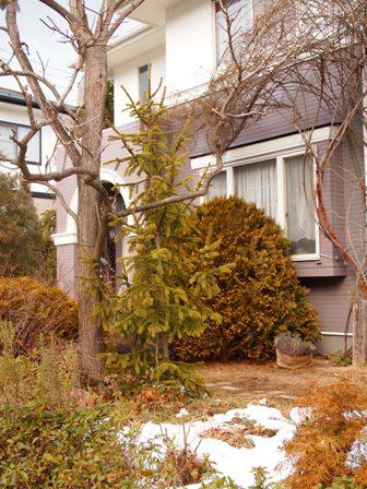 my-garden 048 (2)