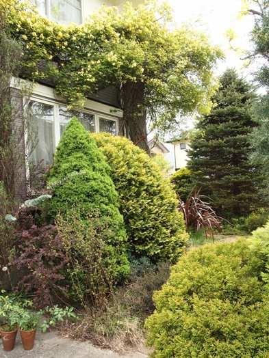 my-garden 121