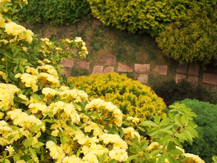 my-garden 115