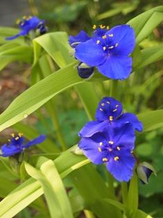 my-garden 013 (4)