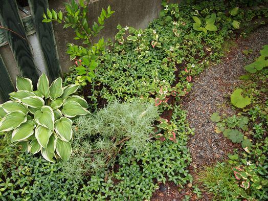 my-garden 116