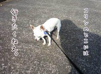 201210211336479ae copy