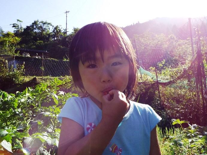 fraise2015p3.jpg