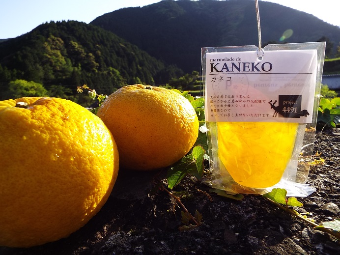 kaneko2015-2.jpg