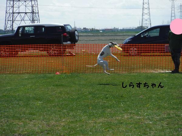 DSCF9700-1.jpg