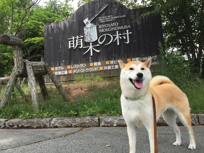 萌木の村・滝見の丘遊歩道を散策