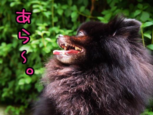 kayokewomonotomosinaiseiei.jpg