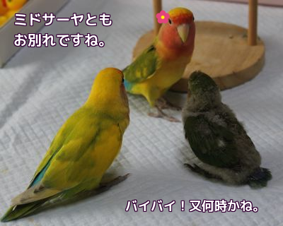 201506131130202b8.png