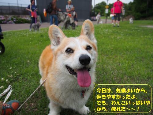 P6140100_convert_20150616235147.jpg