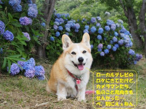P6200181_convert_20150621004557.jpg
