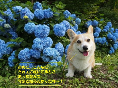 P6230026_convert_20150625004105.jpg