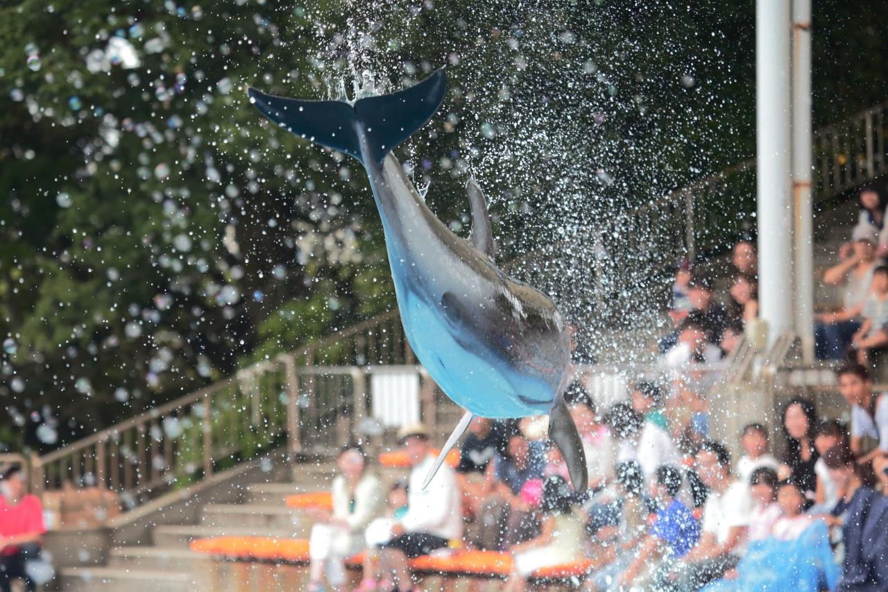 どうなる?日本のイルカ。南知多ビーチランドより。