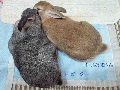 仲良しウサギ