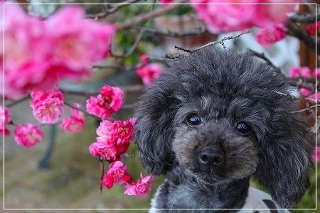 ピンクの花@ナッツ