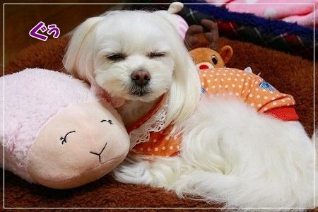 すももん、お休みなさーい!