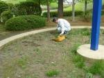砂場表層の雑草を除去