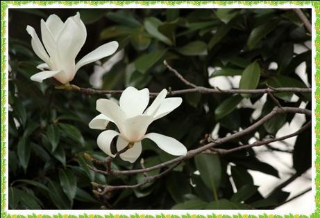 長浜公園の春の花