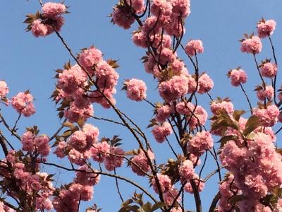 桜の次は・・・