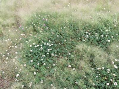 雑草の風景