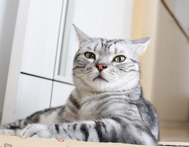 猫のドヤ顔フォトコンテスト